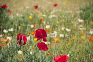 What to Expect | San Diego Family Acupuncture | Flowers